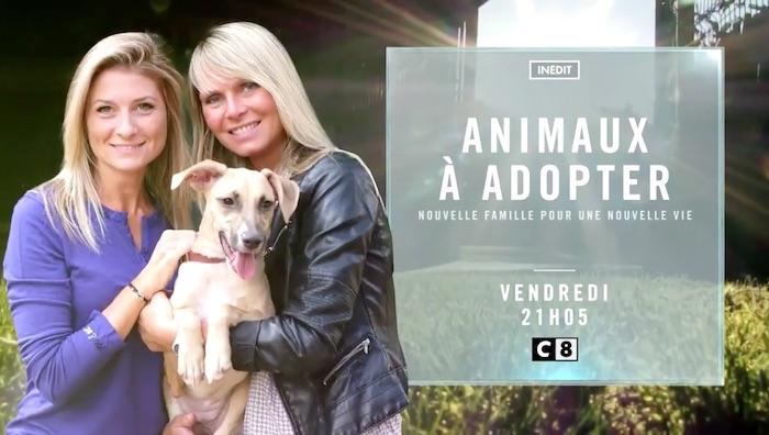 Ce soir sur C8 « Animaux à adopter, nouvelle famille pour une nouvelle vie »