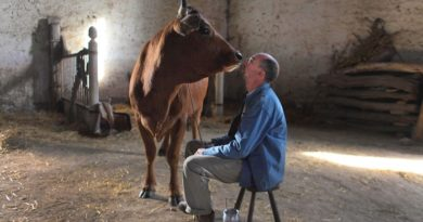 «La vache» de Mohamed Hamidi : c'est ce soir sur France 3 (vidéo)