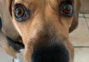 47 personnalités réclament un fonds d'urgence  pour sauver les associations et refuges de protection animale