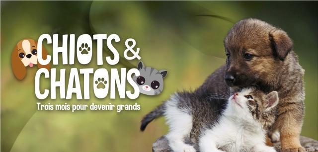« Chiots & chatons : 3 mois pour devenir grands »